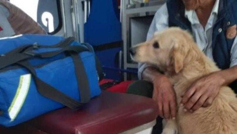 Perro no se separa de su dueño que recibe atención médica tras desmayarse en vía pública