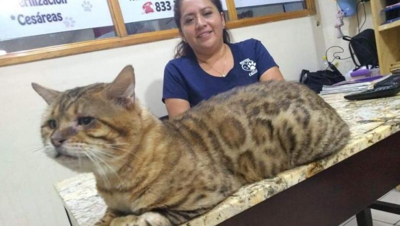 onfunden a gato gigante con leopardo en parque; causa alarma
